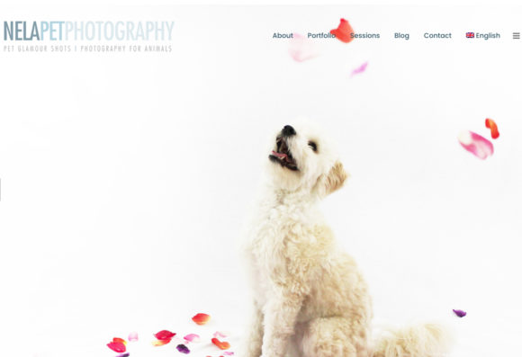 Photography For Animals
